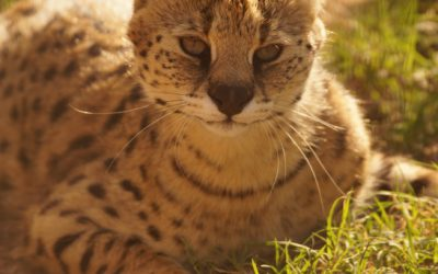 Congrats to our servals Joy & Norrick: Happy Birth