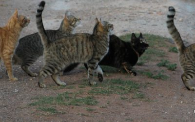 (Feral) cats neutering & vaccination programme.