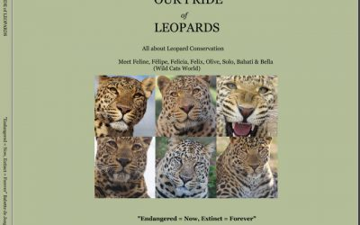 An official NO to leopard conservation in South Africa