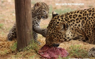 Progress Leopard Conservation Project