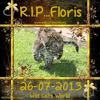 RIP Floris the Leopard