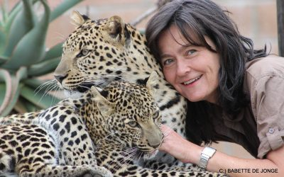 Wild Cats World Leopard Conservation Project; so far…..