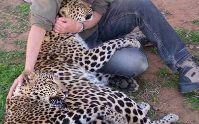 BM_HS_Leopard_lady_Lives_with_wild_cats by Hannah Stevens