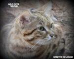 Volunteering at Wild Cats World