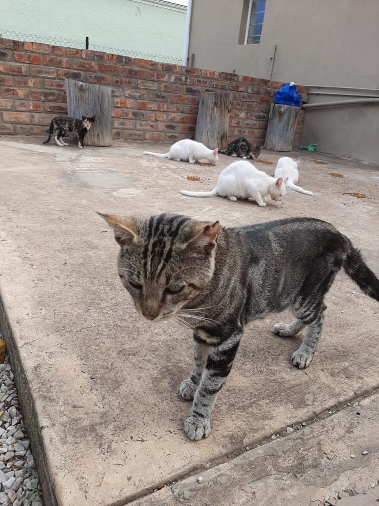 WCW feral cat operation in Kirkwood, Eastern Cape, South Africa