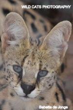 All lives matter @ Wild Cats World