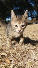Orphan African wildcat kitten: Phoebe